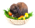 Rabbit in a basket with Easter eggs Royalty Free Stock Photos