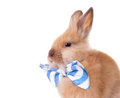 Rabbit with bow tie Royalty Free Stock Images