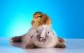 Rabbit chick wiosna kolorowy jaskrawy temat Fotografia Royalty Free