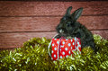 Rabbit and christmas present Royalty Free Stock Photo
