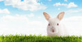Rabbit close up view of nice young on blue sky back Royalty Free Stock Image