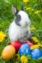 The  rabbit and  easter eggs Royalty Free Stock Photography