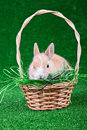 Rabbit for gift Stock Photo