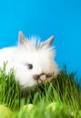 Rabbit is in the grass Stock Photography