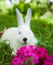Rabbit on the grass bunny cute outdoors Stock Photography
