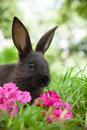 Rabbit on the grass bunny cute outdoors Royalty Free Stock Photos