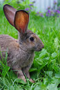 A rabbit is in a grass young among green Royalty Free Stock Images