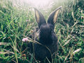 Rabbit in green grass portrait of Royalty Free Stock Photo