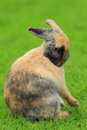 Rabbit the grey and black standing on the grass Stock Images