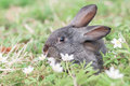 Rabbit grey in grass closeup Royalty Free Stock Photography