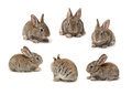Rabbit grey on a white background Stock Photography