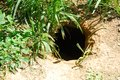 Rabbit Hole Animal Burrow