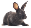 Rabbit image of a black bunny Royalty Free Stock Photos
