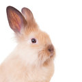 Rabbit isolated on a white  Stock Images