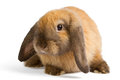 Rabbit Isolated On White Backg...