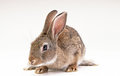 Rabbit looking the camera with copy space Royalty Free Stock Photos