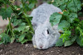 Rabbit play hide-and-seek Stock Photography