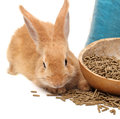 Rabbit and rabbit feed on white background Stock Photography