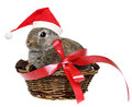 Rabbit with a red santa cap little cute in basket Royalty Free Stock Photos