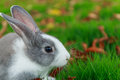 Rabbit run on grass little Royalty Free Stock Images