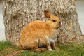 Rabbit side portrait of on grass in front of tree Royalty Free Stock Image