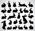 Rabbit silhouettes Royalty Free Stock Image