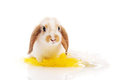 Rabbit sitting on grass with yellow daisies Stock Photo