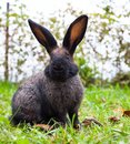Rabbit sitting on green grass in the city park Royalty Free Stock Photography