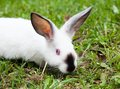 Rabbit sitting on green grass in the city park Royalty Free Stock Images