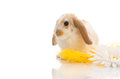 Rabbit sitting on yellow grass with daisies Royalty Free Stock Images