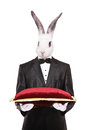 Rabbit in a suit holding a red velvet pillow isolated on white background Royalty Free Stock Photos