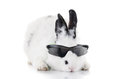 Rabbit in sunglasses isolated see my other works portfolio Stock Photography