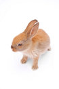 Rabbit on white Royalty Free Stock Photos