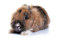 Rabbit white background looking ahead breed dwarf Stock Photo
