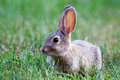 Rabbit a wild sitting in the grass Stock Photos