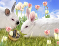 Rabbits And Chocolate Eggs Royalty Free Stock Photos