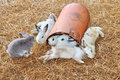Rabbits close up of on dry grass Royalty Free Stock Photo