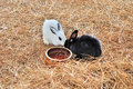 Rabbits close up of on dry grass Stock Photography