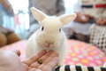 Rabbits cute in close up Royalty Free Stock Image