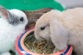 Rabbits eating food in the garden Stock Image