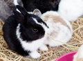 Rabbits group of beauty cute sweet little easter bunny baby in variety colors black brown and white Royalty Free Stock Photo