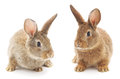 Rabbits image of a two bunny Royalty Free Stock Photos