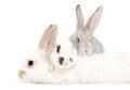 Rabbits two lying on the third rabbit Stock Photo