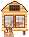 Rabbits in the wooden coop