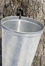 Raccolta della linfa dell'albero di acero Immagini Stock Libere da Diritti