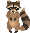Raccoon cartoon Stock Photography
