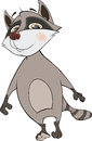 Raccoon cartoon it is white a grey lovely striped Stock Photo