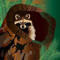 Raccoon vector cute wild wildlife animal