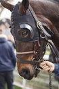 Race horse head with blinkers ready to run. Paddock area. Royalty Free Stock Photo