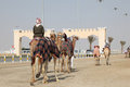 Racing camels in Doha Royalty Free Stock Photography
